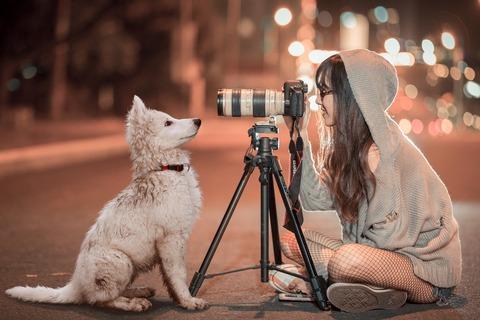 puppy-3688871_1920